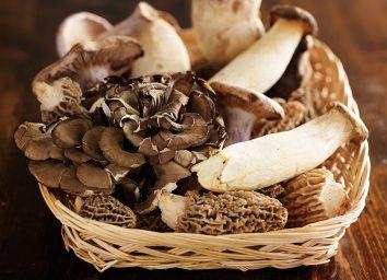wild mushrooms in basket