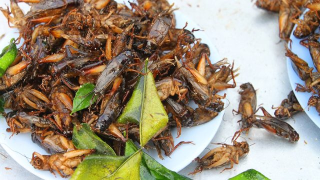 Crickets 9 ugs you dont know youre eating.jpg
