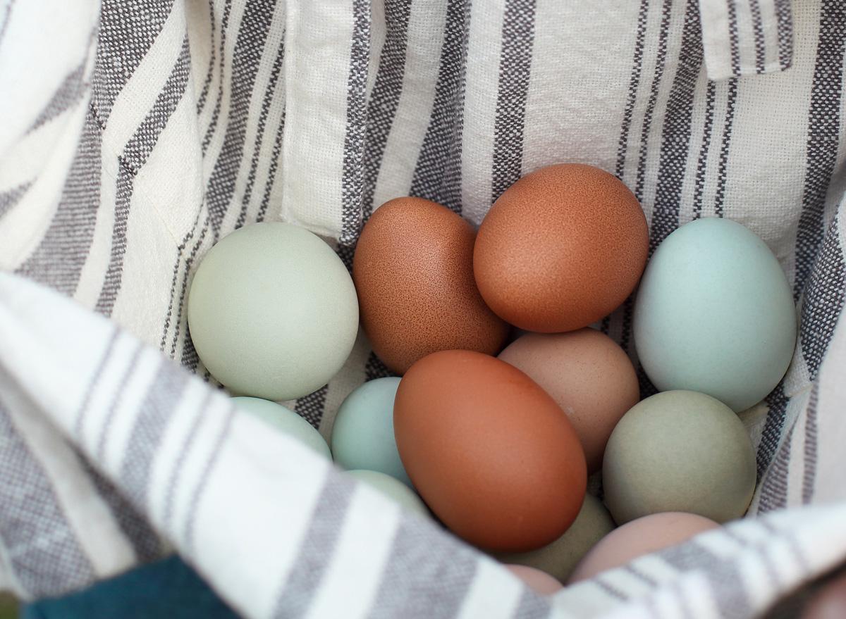 Blue brown organic eggs
