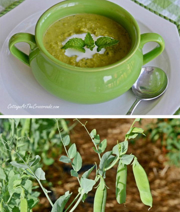 Chilled minty pea soup recipe