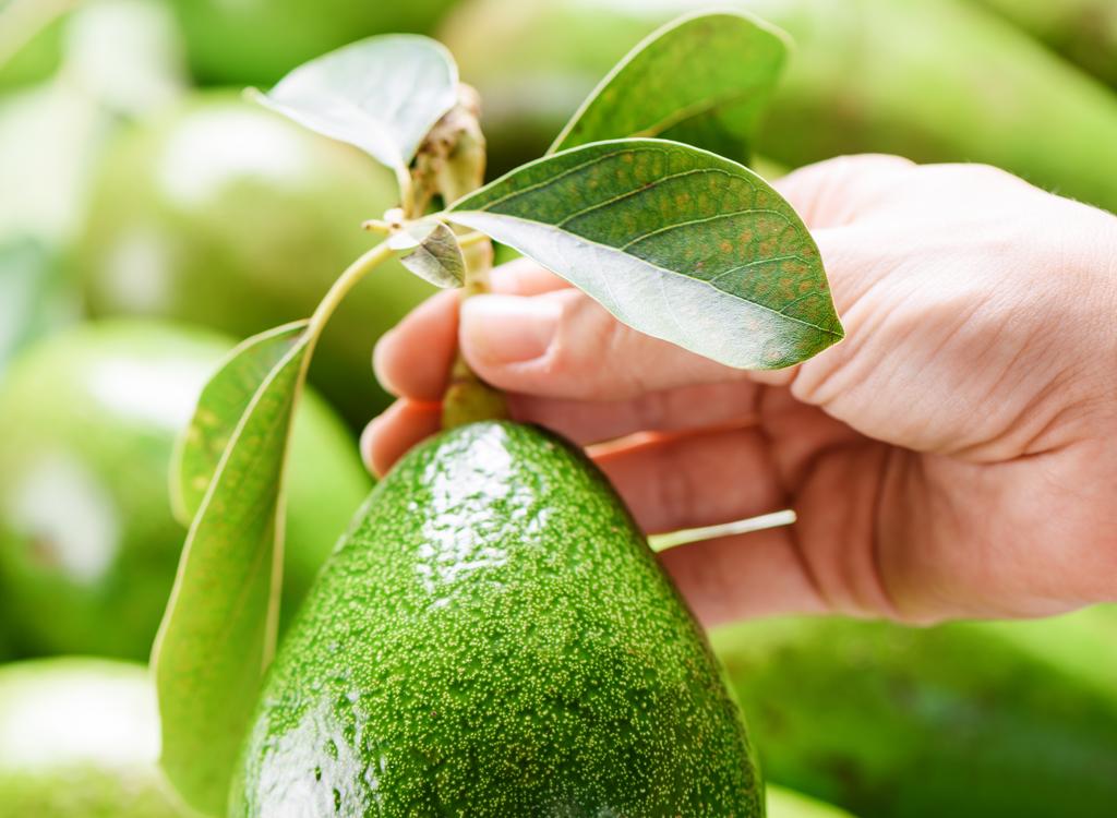 Check avocado stem