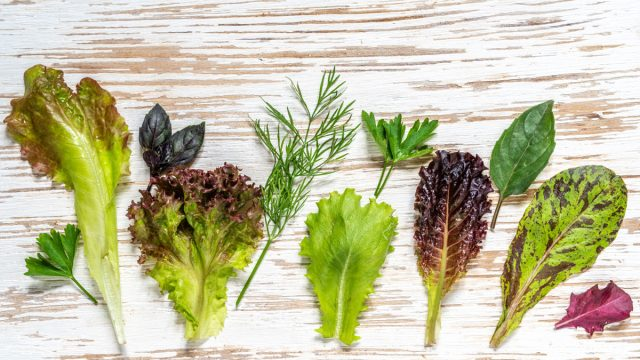 Different types of lettuce