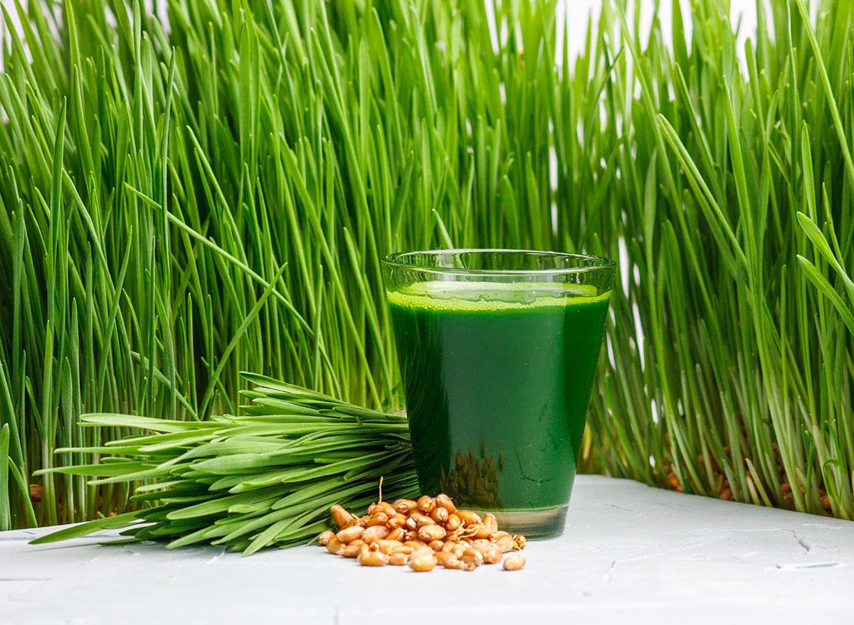 wheatgrass plant form shot form