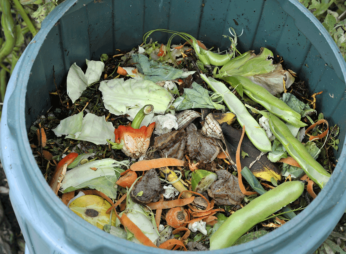 compost pile in bin