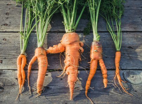 Imperfect produce ugly carrots