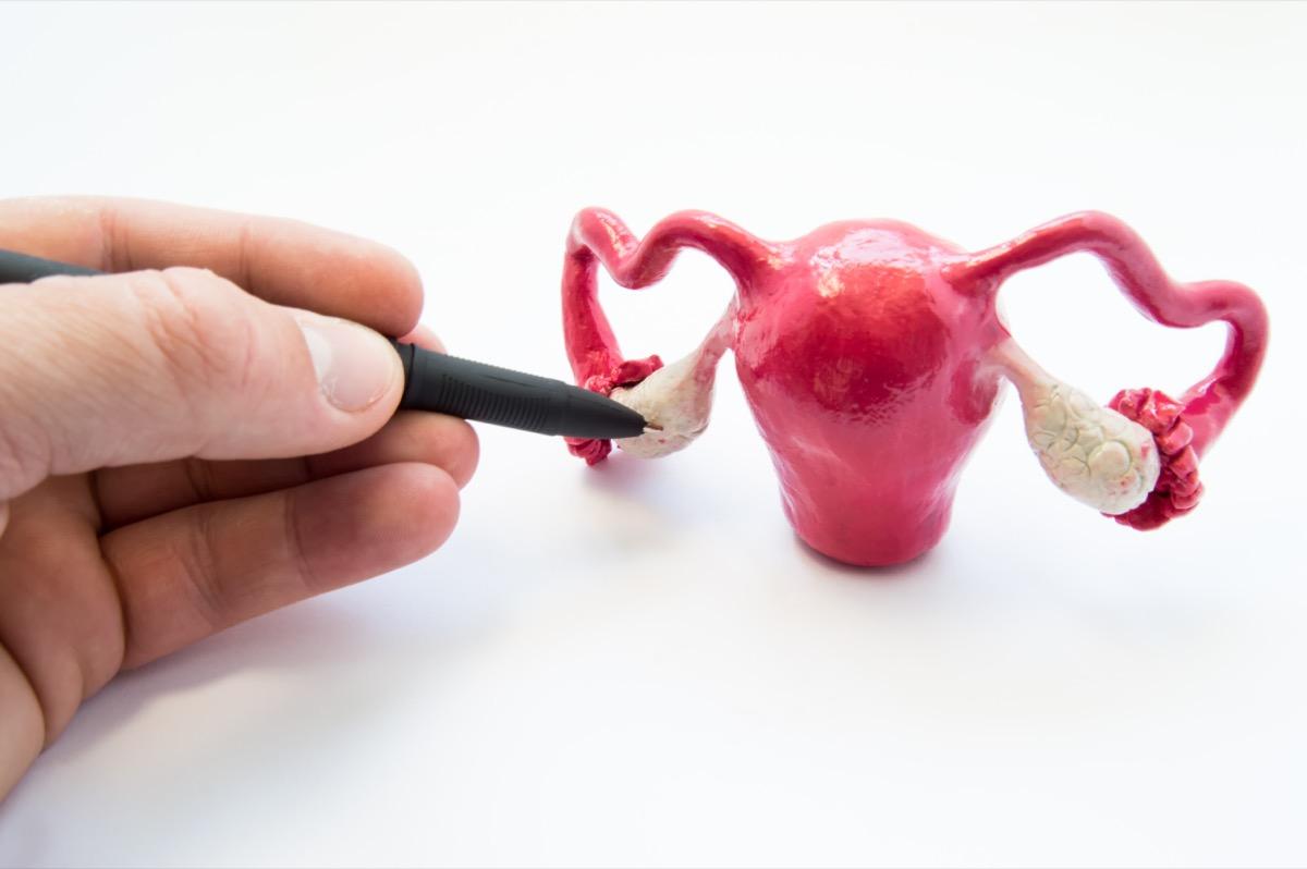 Doctor or teacher points of ballpoint pen on ovaries on anatomical model of internal female sex organs