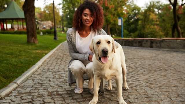 young smiling african american woman in casual clothes sitting near dog while walking in park