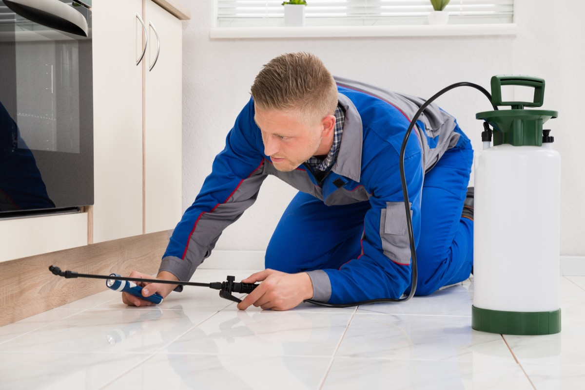 Male Worker Kneeling On Floor And Spraying Pesticide On Wooden Cabinet