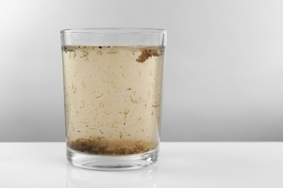 Glass of contaminated water