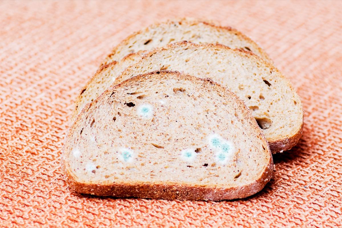 Mildew on a slice of bread