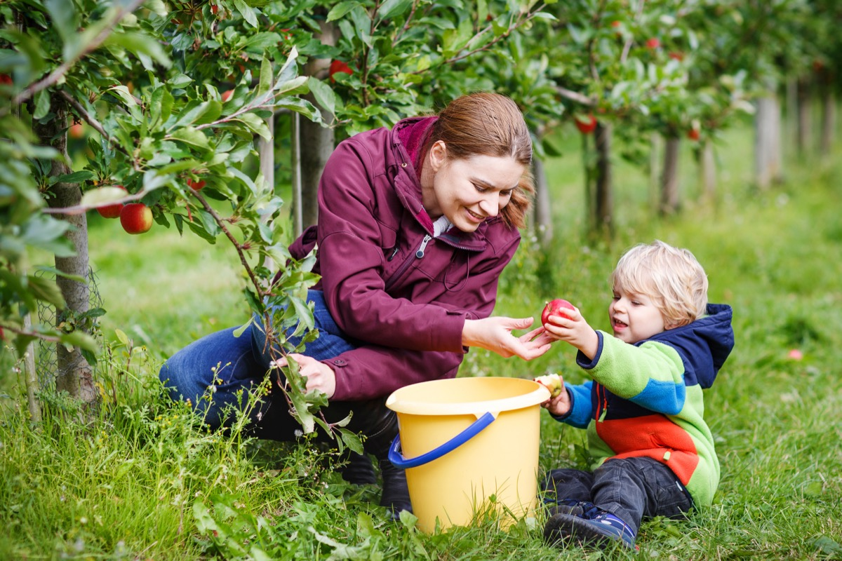 boy of two years and his mother picking red apples in an orchard