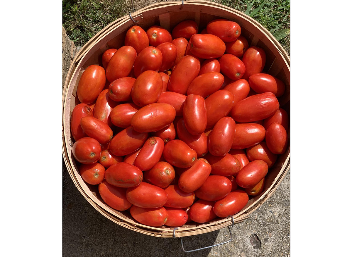 homemade sauce tomatoes