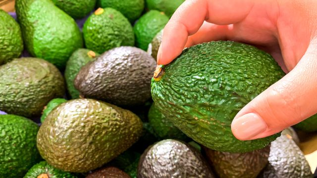 Picking an avocado about to check the inside of the stem