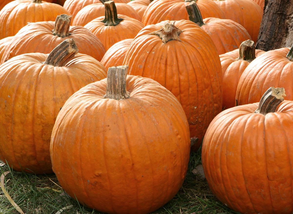 stemmed pumpkins