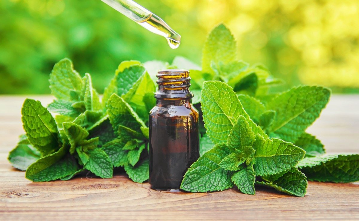 The mint extract in a small jar