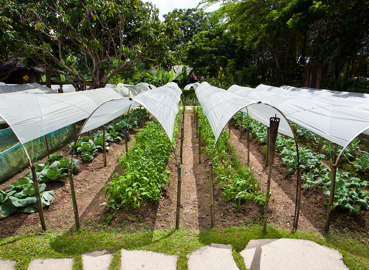Sustainable farming outside