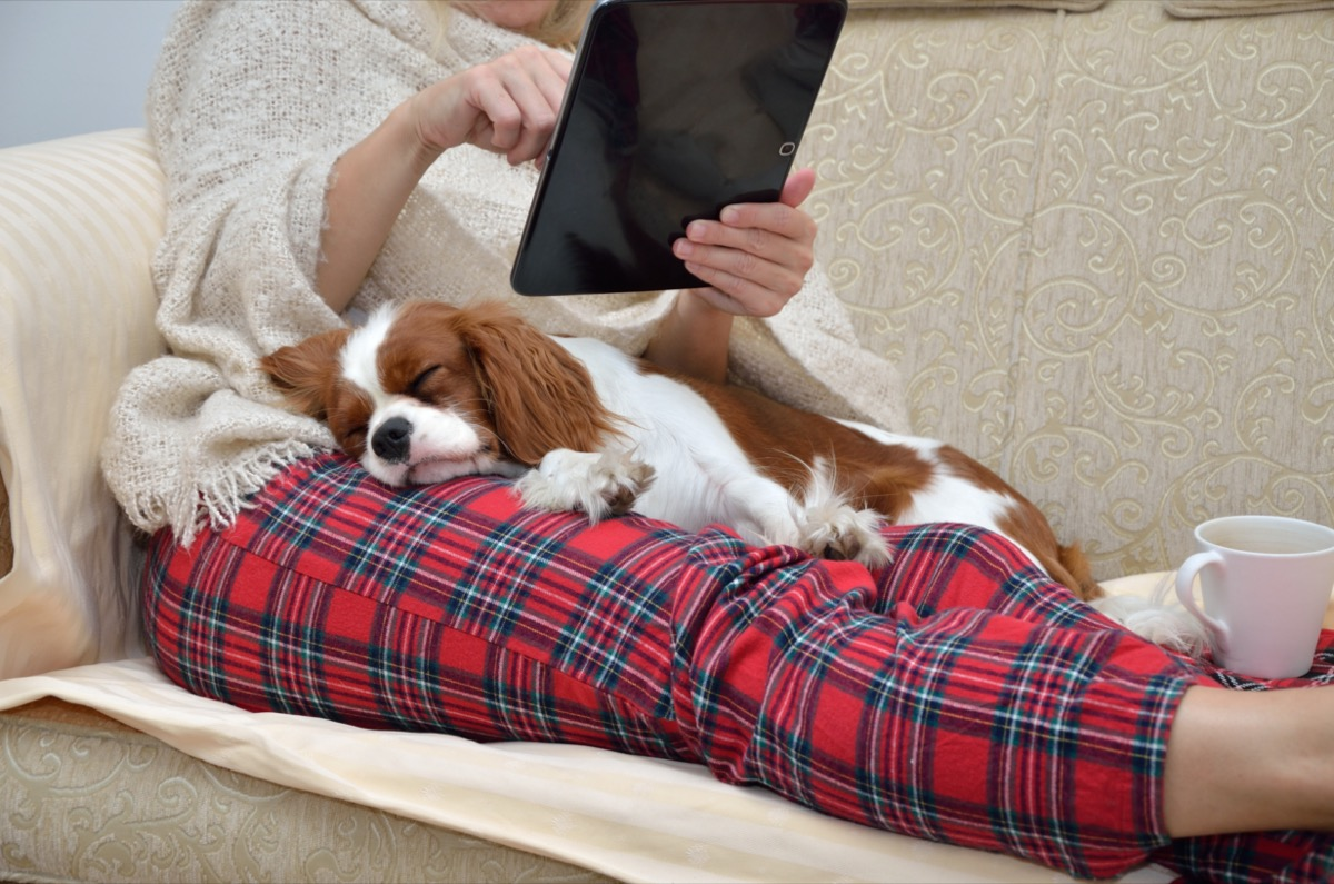 Woman in cozy home wear relaxing on sofa with a sleeping cavalier dog on her lap, holding tablet and reading