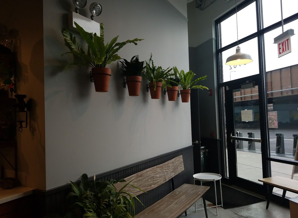 interior of backlot coffee in chicago with hanging potted plants and wooden bench