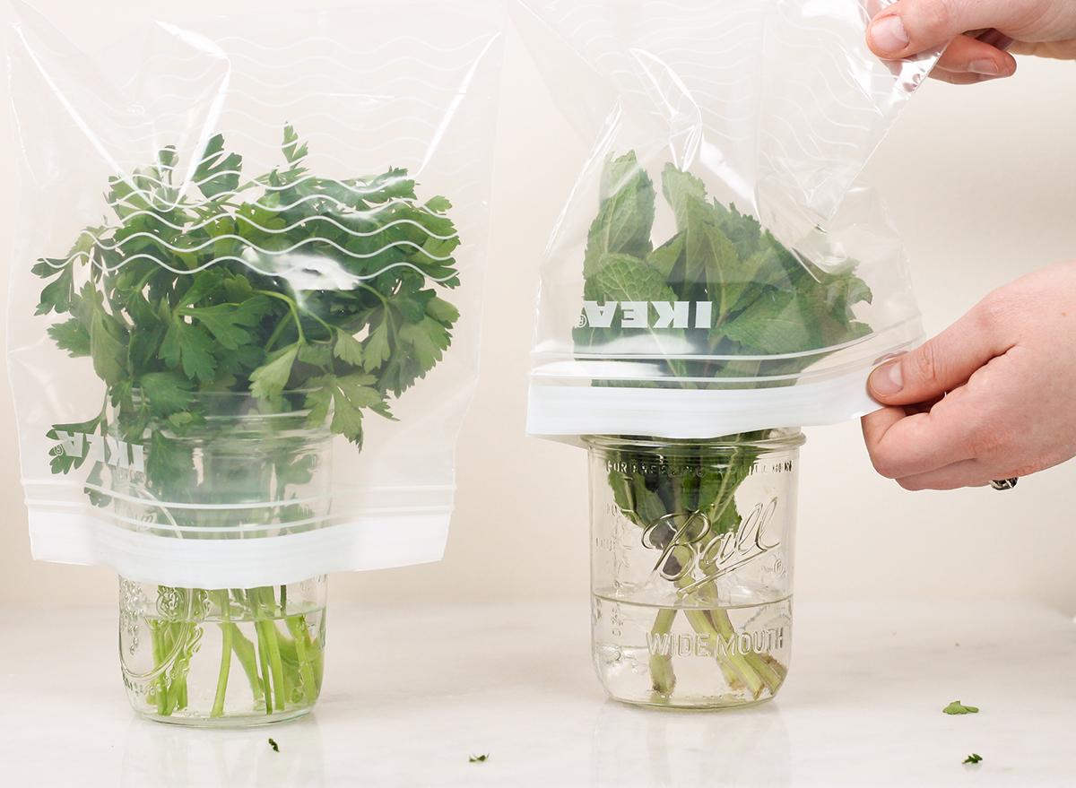 covering herbs with ziplock bag