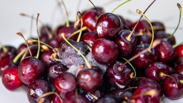 moldy cherries