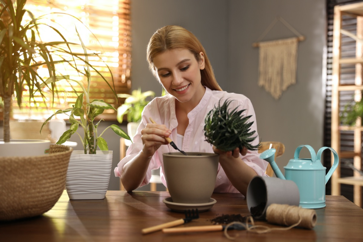 Young woman potting succulent plant at home