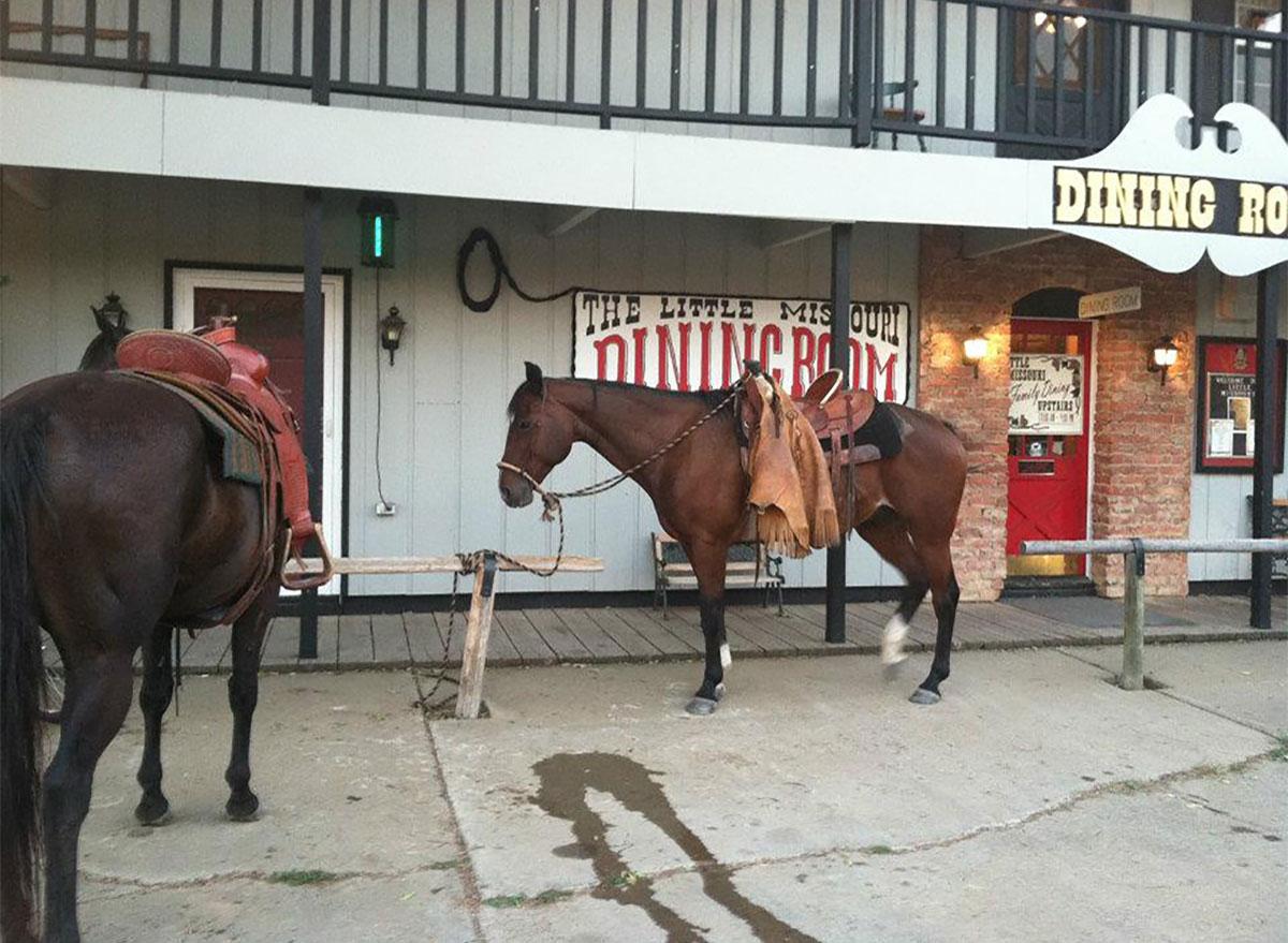 horses outside little missouri saloon in north dakota