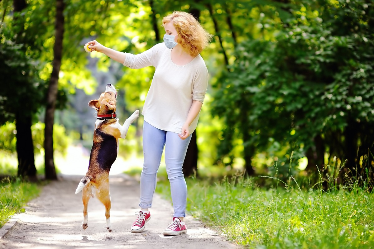 woman wearing disposable medical face mask playing with Beagle dog in the park