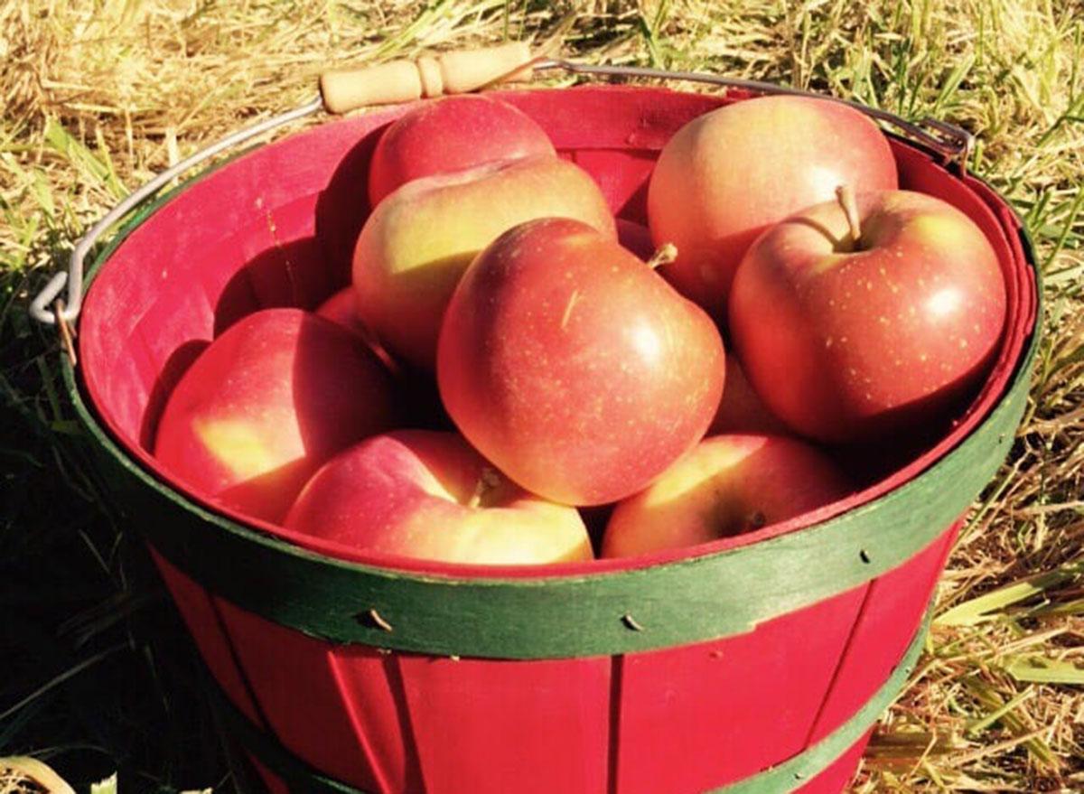 alldredge orchards missouri