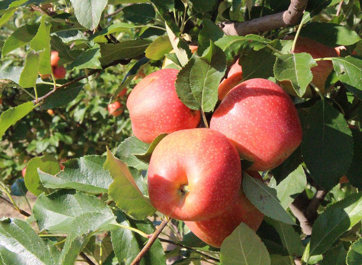 apple valley texas