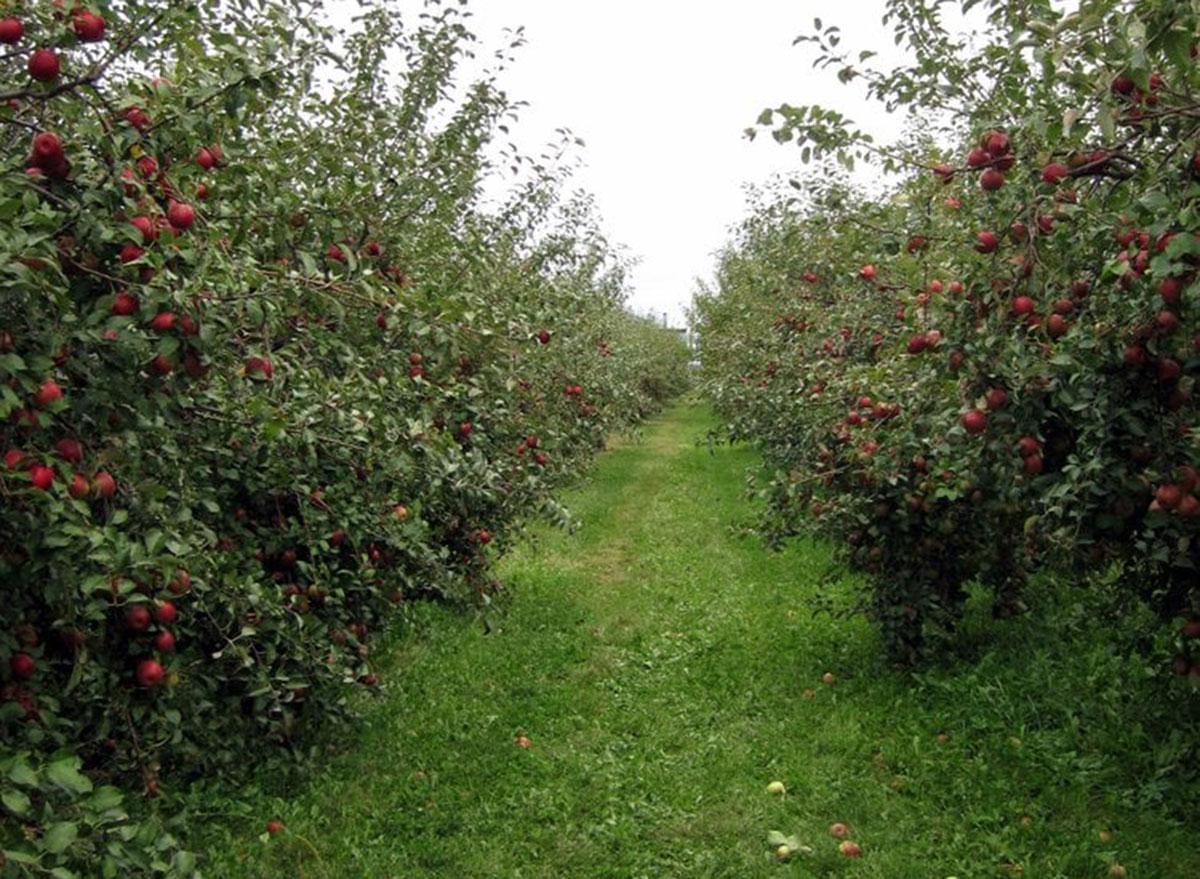 country apple orchard south dakota