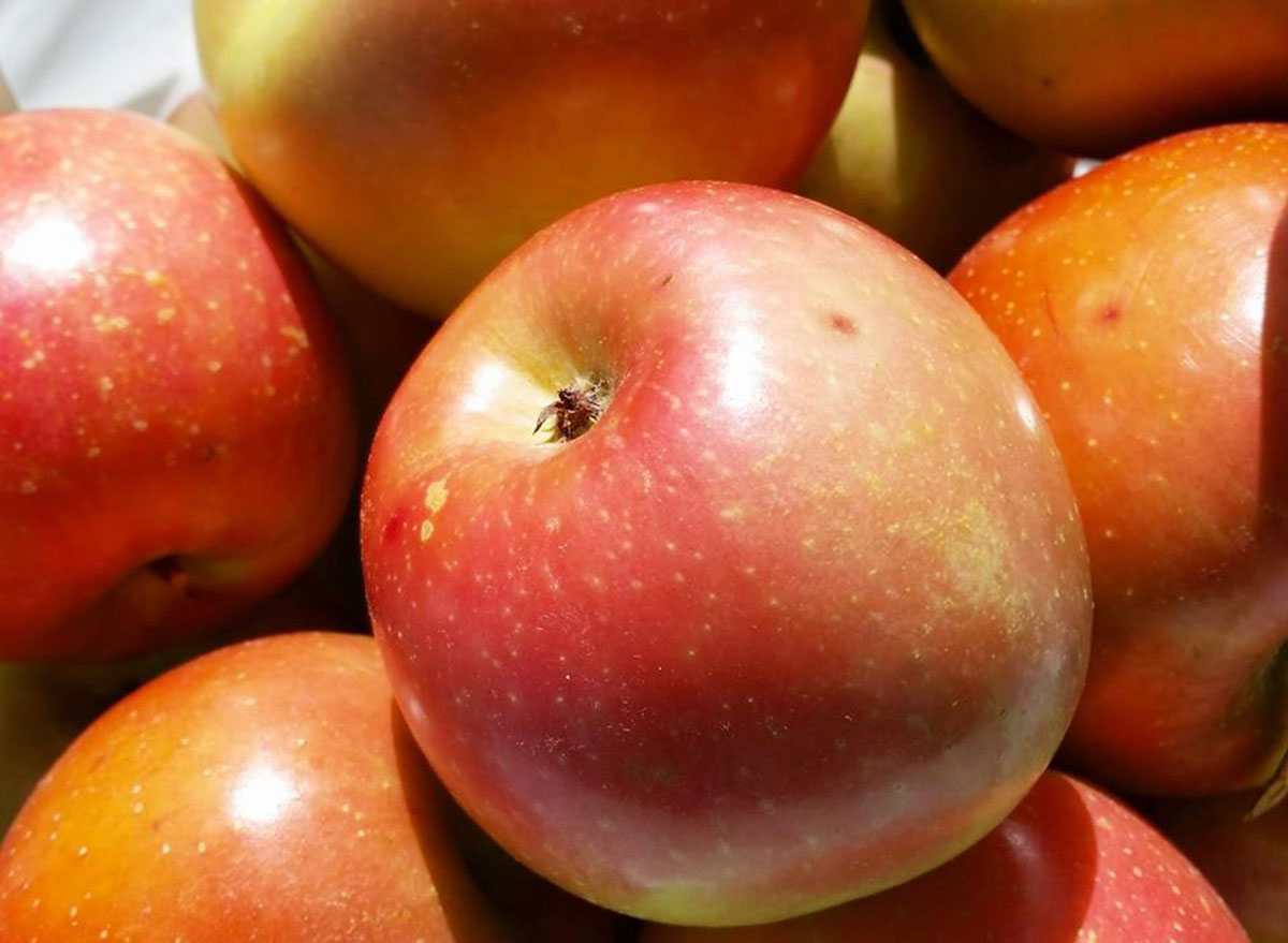 cox berry farm arkansas