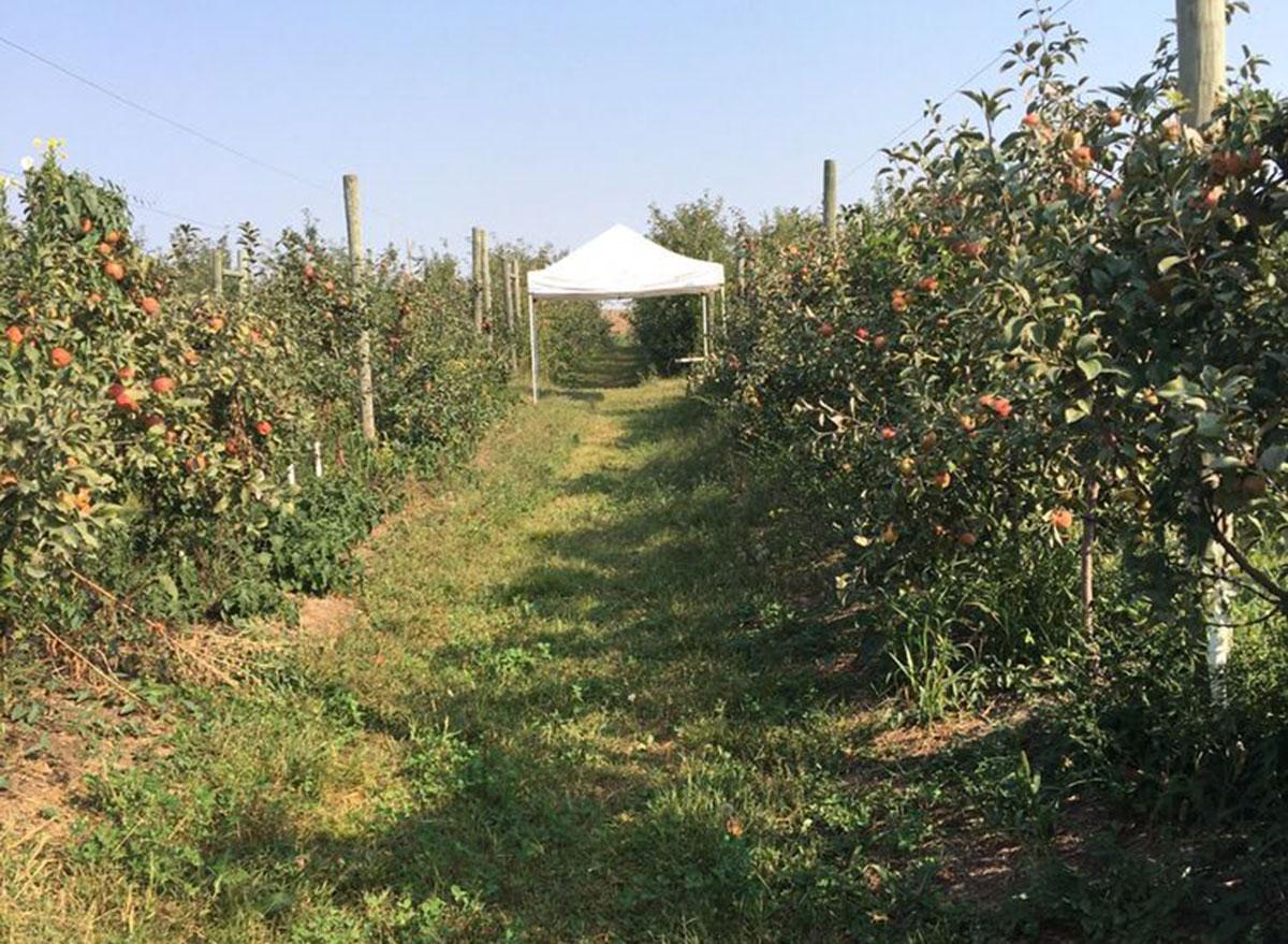 iowa orchard iowa