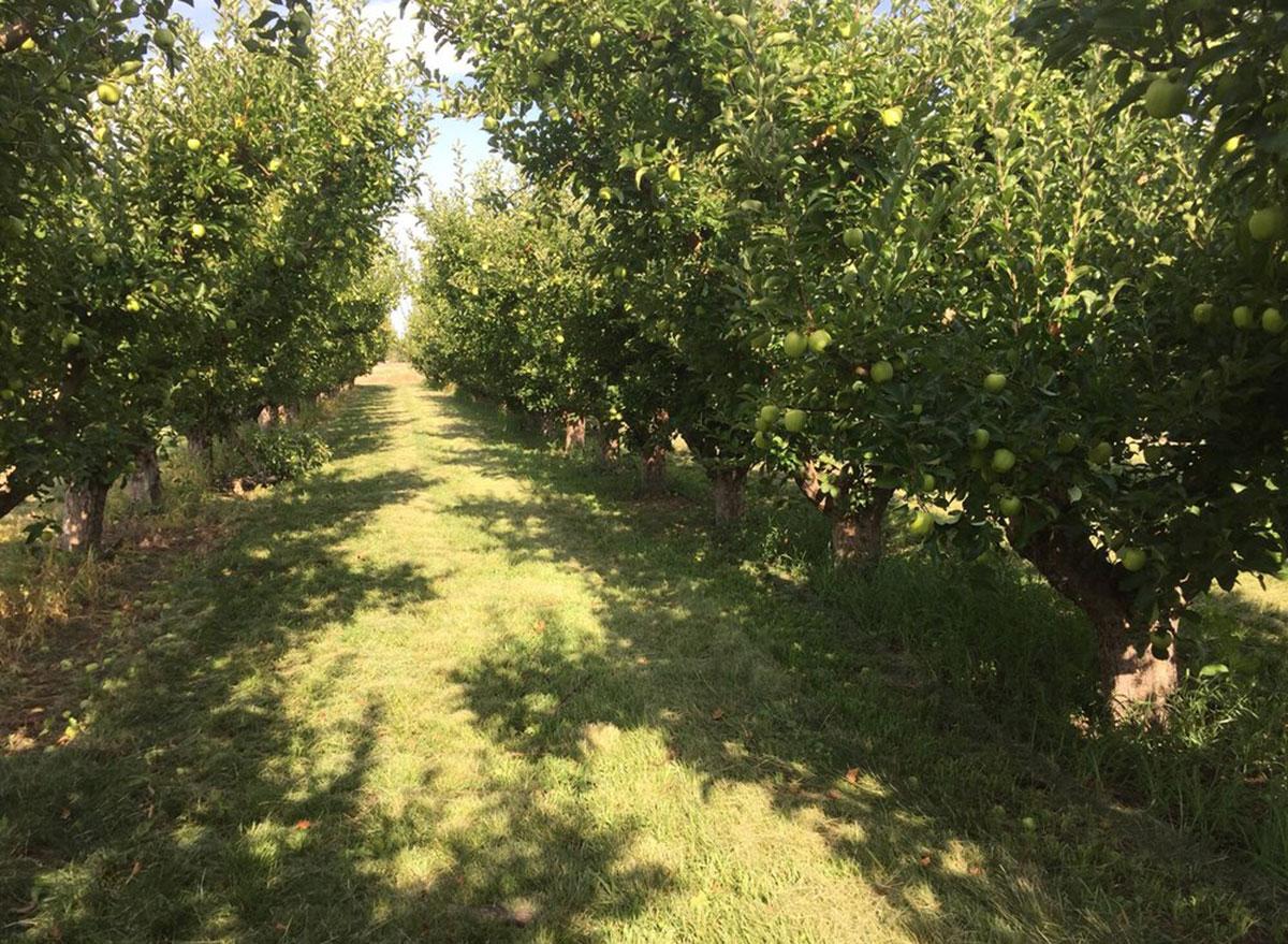 kelley orchards idaho