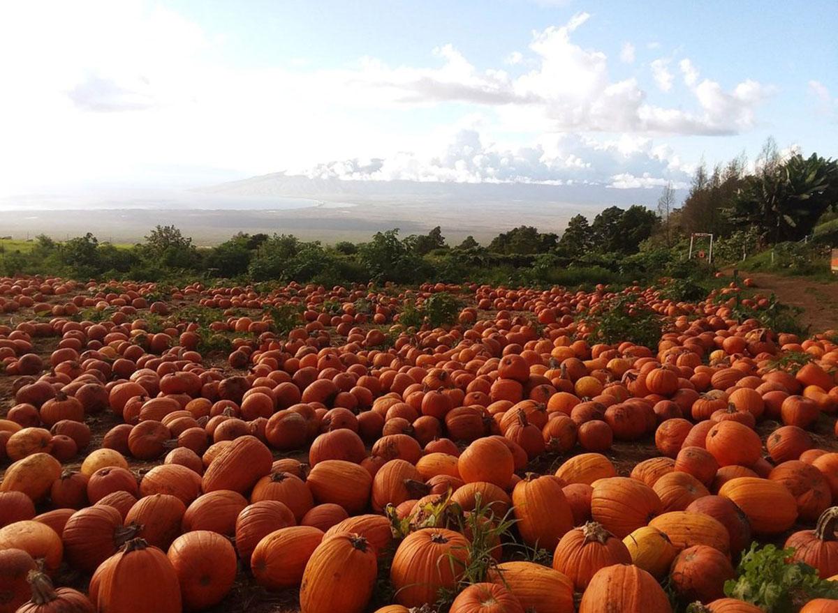 kula country farms hawaii
