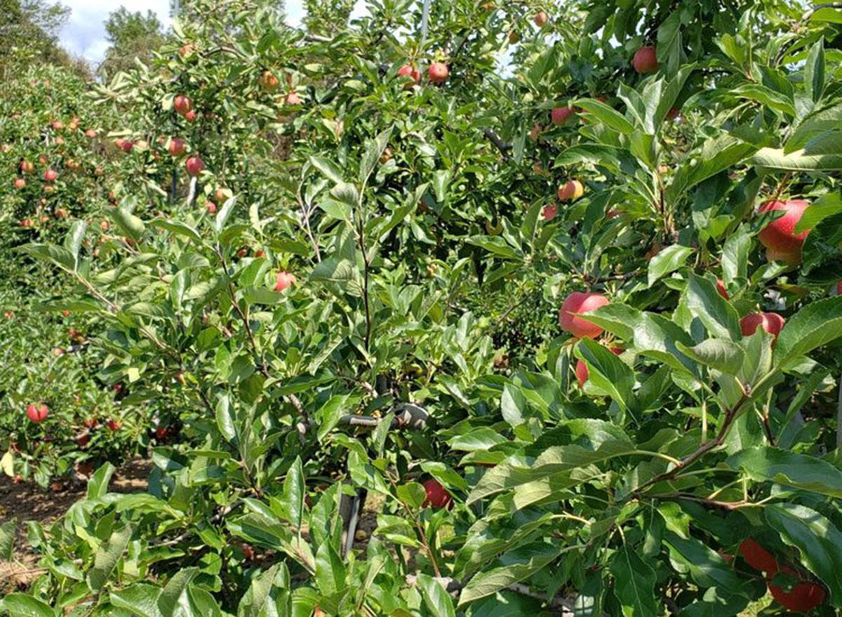 lyman orchards connecticut