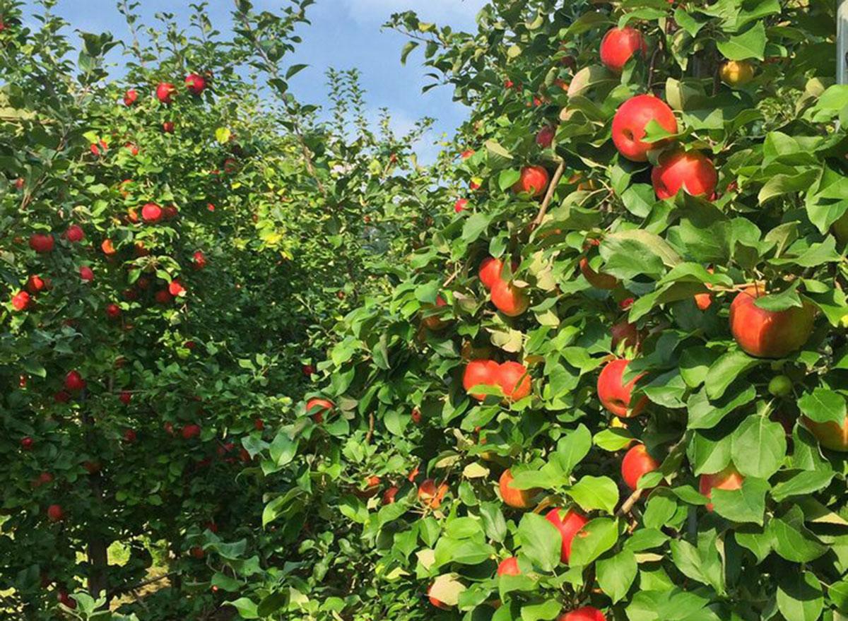 solebury orchards pennsylvania