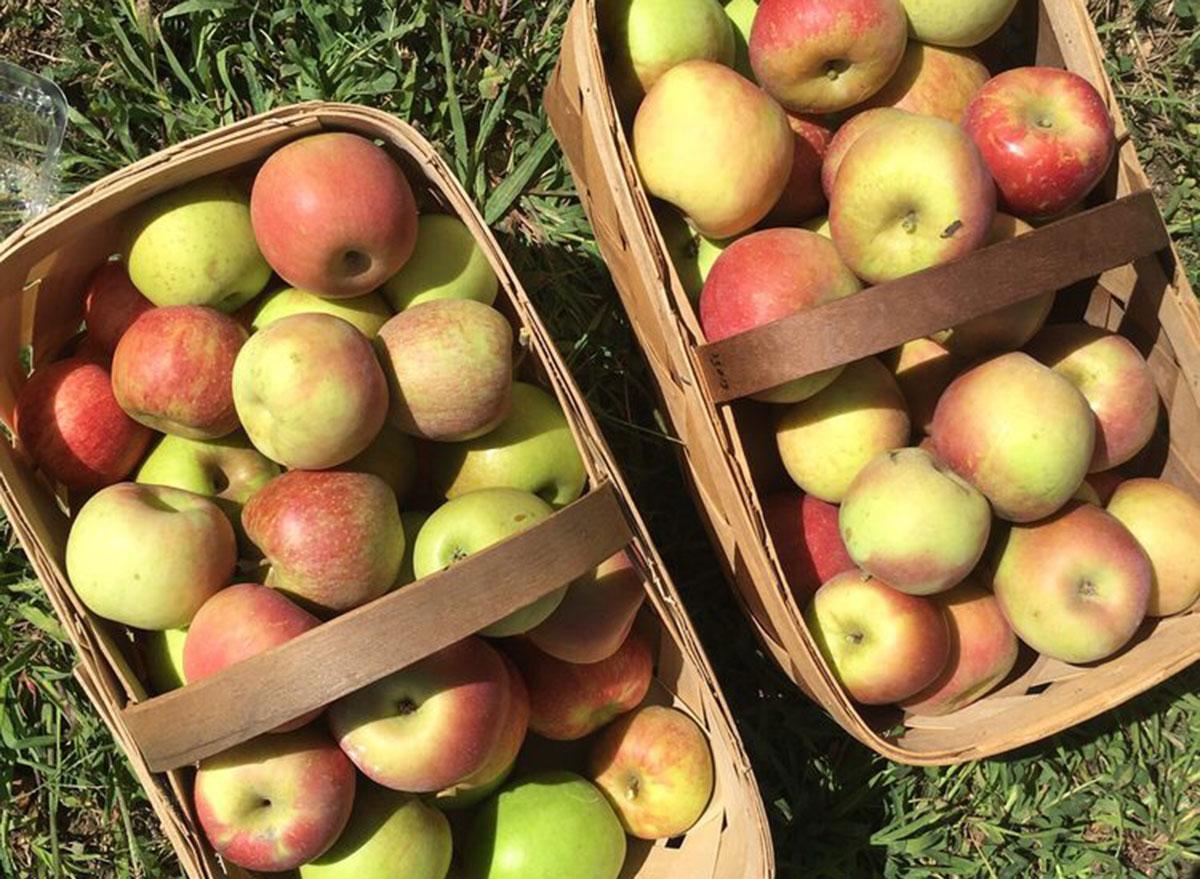 stepp orchard north carolina