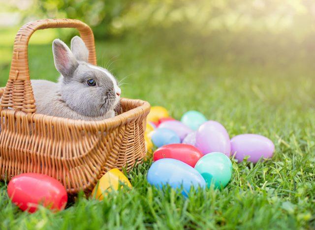 Easter, Easter basket, bunny