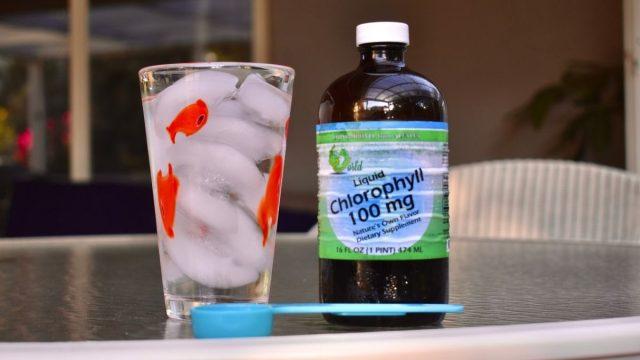 chlorophyll water main image close up