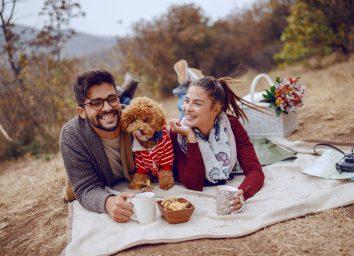 dog at a picnic