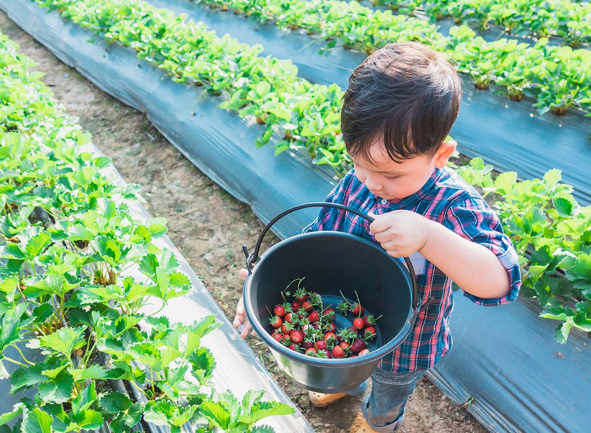 boy picking stawberries