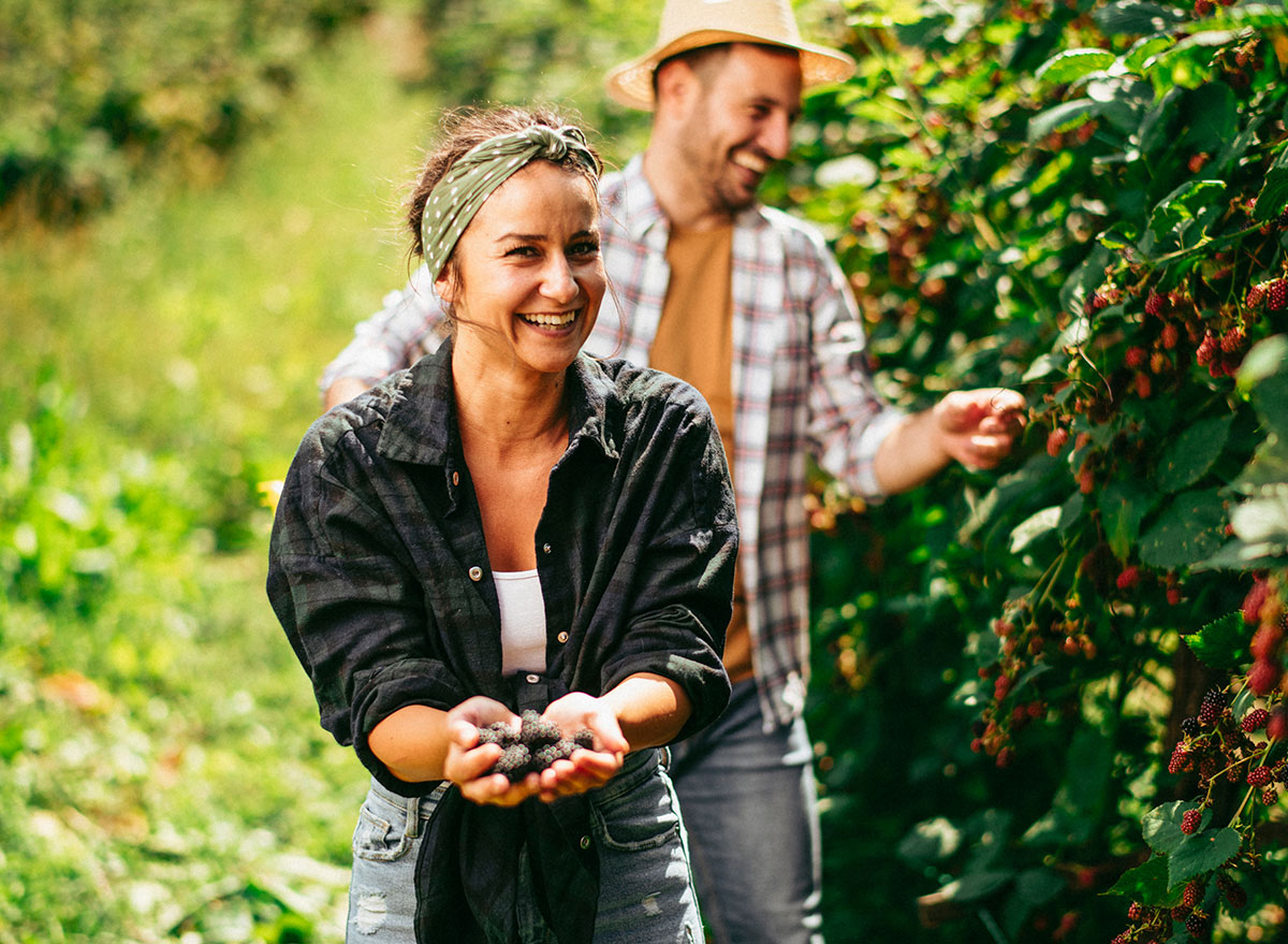 couple picking berries