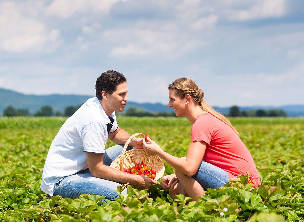 couple picking strawberries