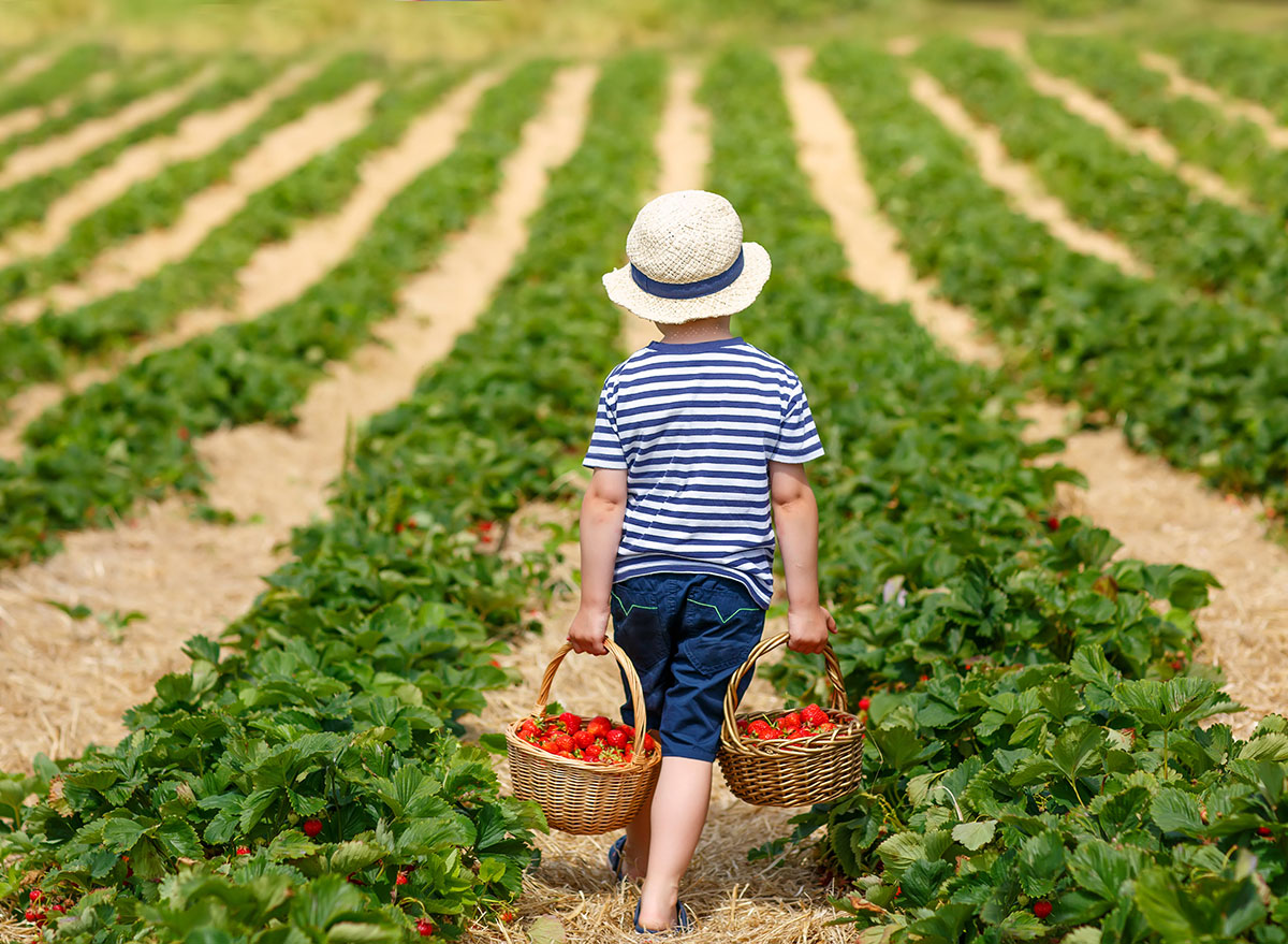 little boy picking fruit