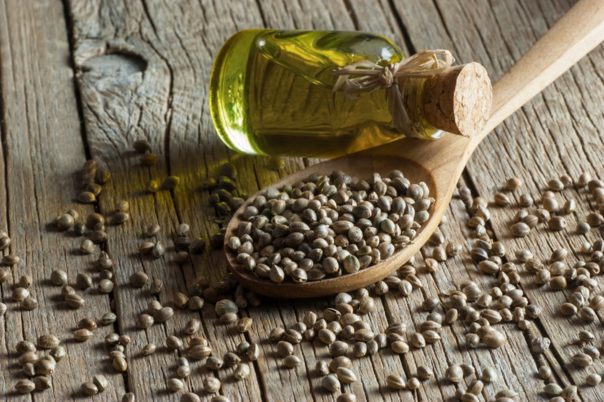 Heap of dried organic hemp seeds or cannabis plant seeds in spoon with glass of hemp seed oil on wooden backdrop.