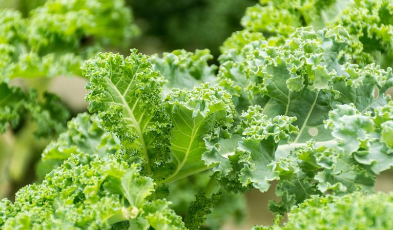 America's Largest Grocery Chain's Kale May Be Contaminated, and 6 Other Recalls to Know About This Week