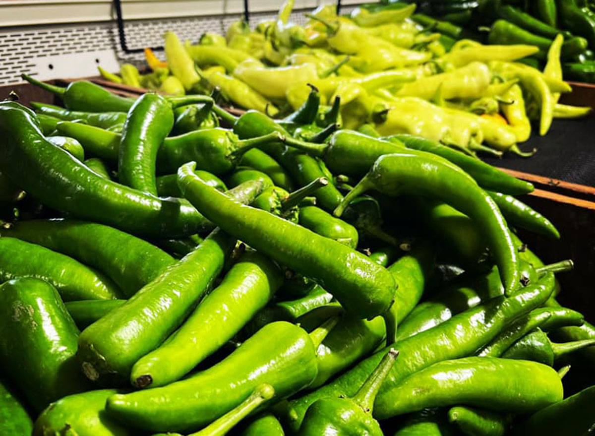 colorado chile and frijoles festival