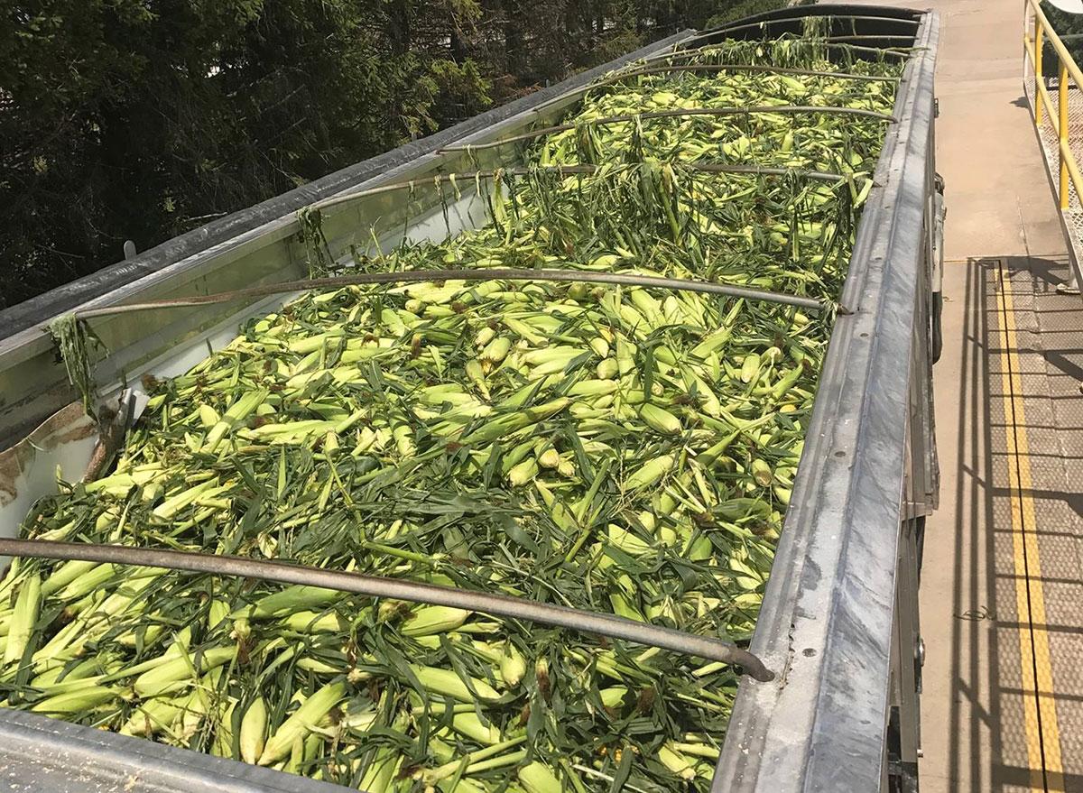 iowa west point sweet corn festival