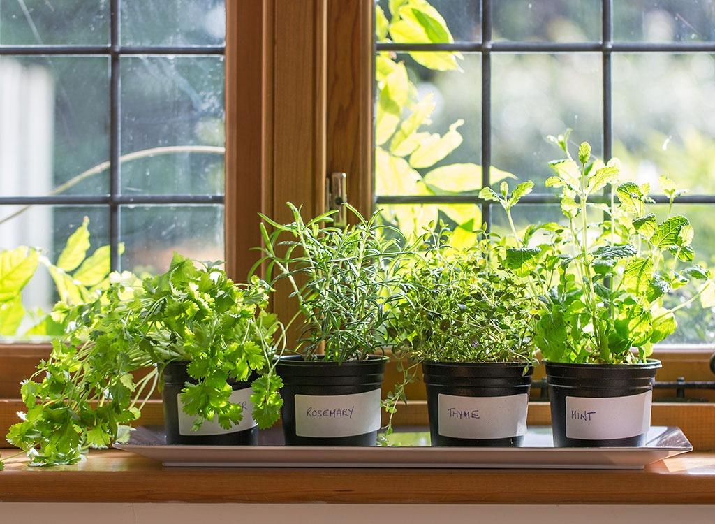 Potted herbs on windowsill