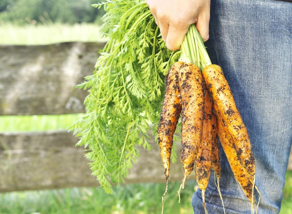 Fun weight loss garden vegetable